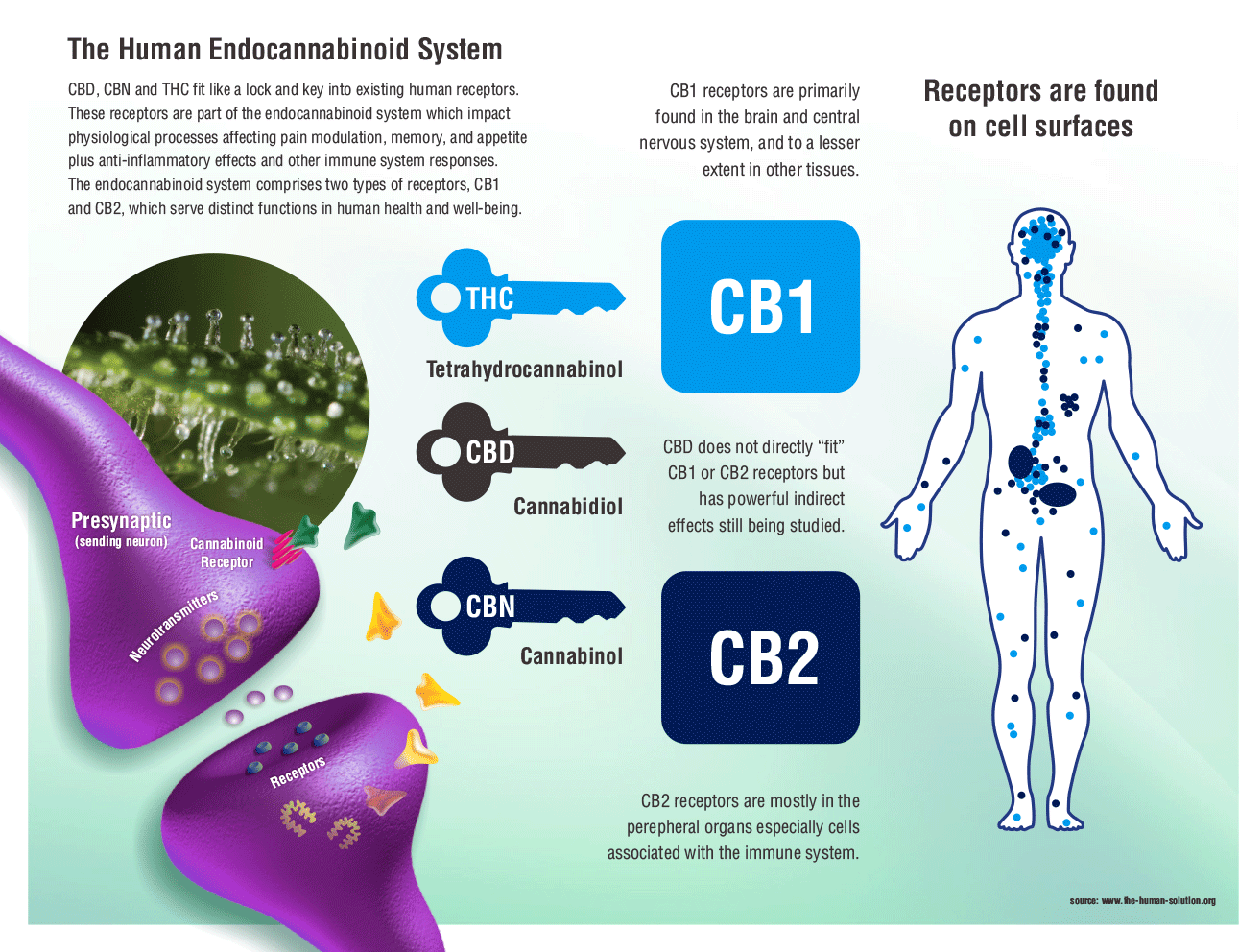 https://medium.com/randy-s-club/supporting-your-endocannabinoid-system-5db4c35d6037