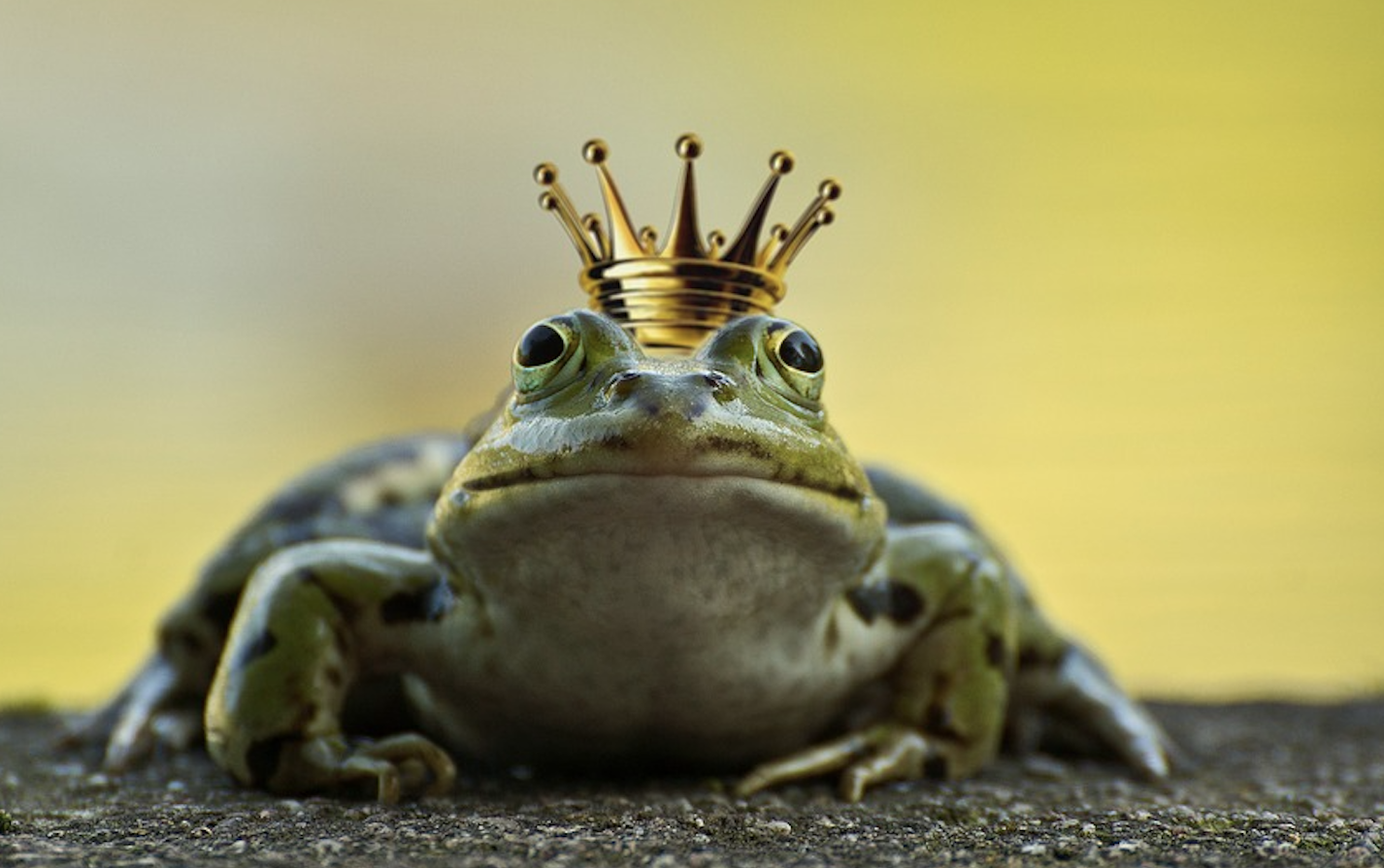 dating advice most prince charmings make better frogs