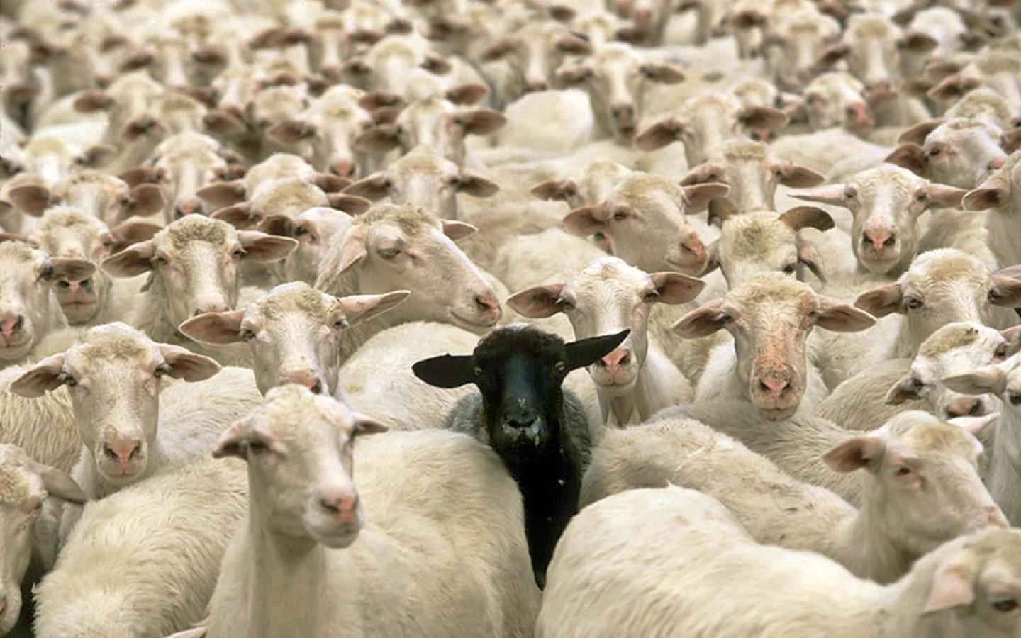 Why Being A Black Sheep Is The Only Way To Become Billionaire
