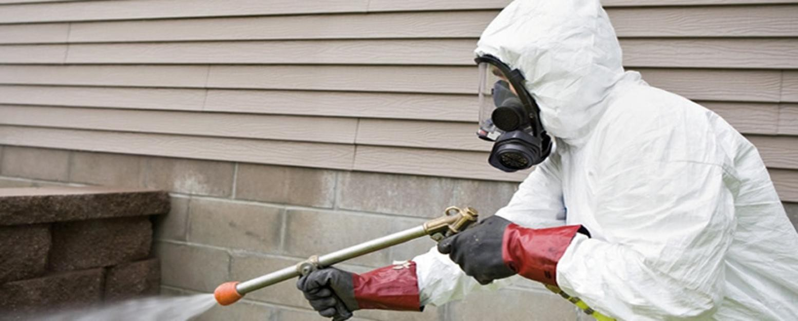 Professional Pest Control Services Have the Edge over DIY Efforts