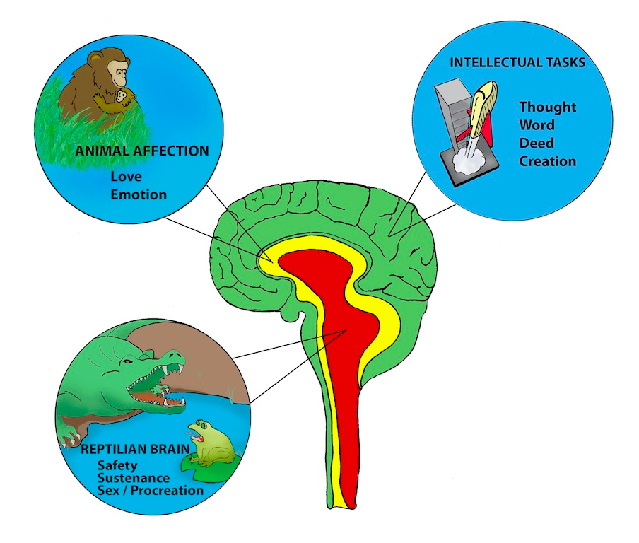 A Brief Overview Of The Developing Brain How You Can Help Your Kids
