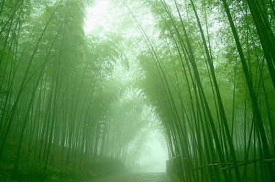 growing your bamboo tree a parable on patience perseverance and