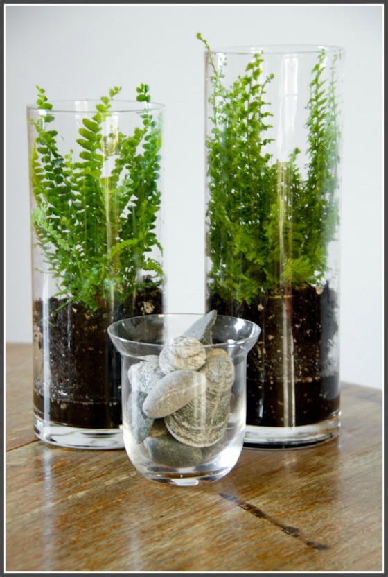 ferns in glass containers
