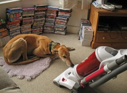 Using The Best Vacuum Cleaner For Pet Hair Can Omit Tons Of Dog Fur In Blankets Carpets As Well Other Furniture