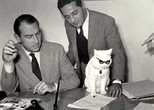 Cat at office with two men