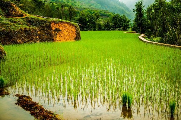 Banaue Rice Terraces Photo by Nathan Sado from Fit Living Lifestyle
