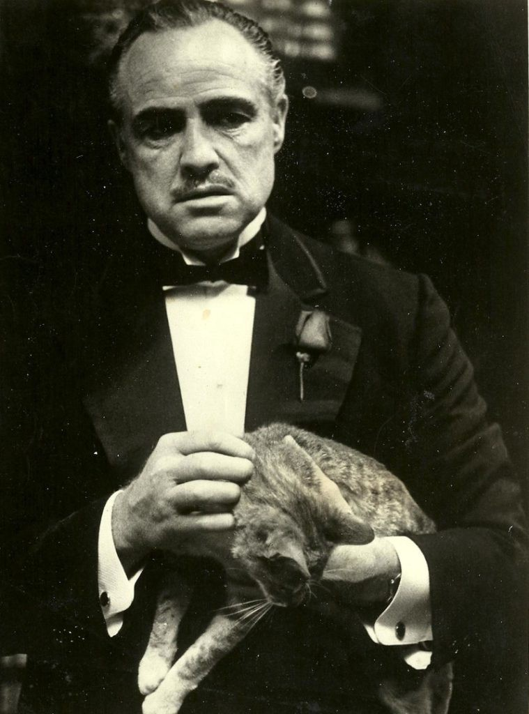 Marlon Brando with cat in the Godfather