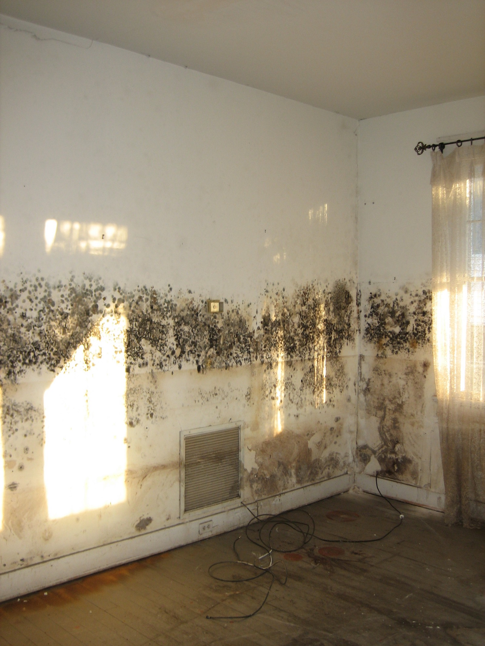 What Is Mildew How To Remove It