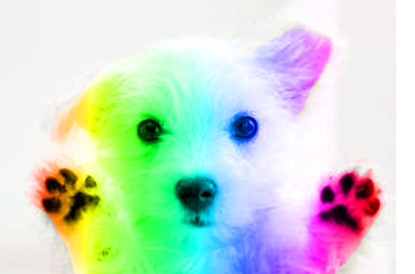 rainbows and puppies