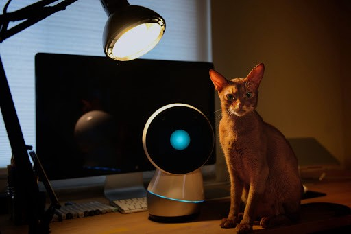 Jibo and Abyssinian Johnny