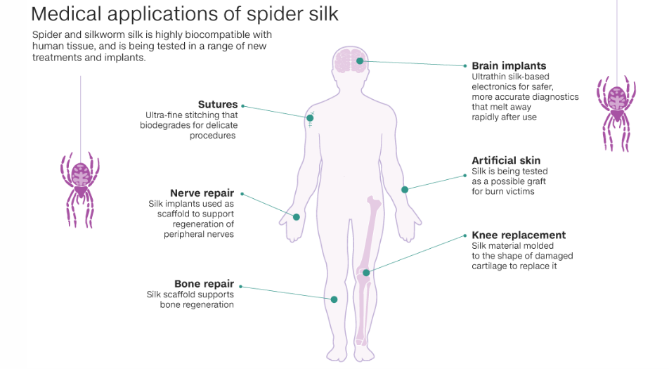 Harnessing spider powers to heal human bodies – TheMedicalFrontier ...