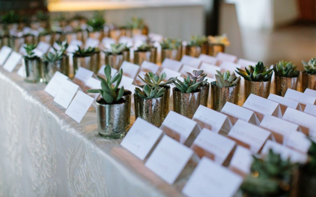 Succulents in pots on the table