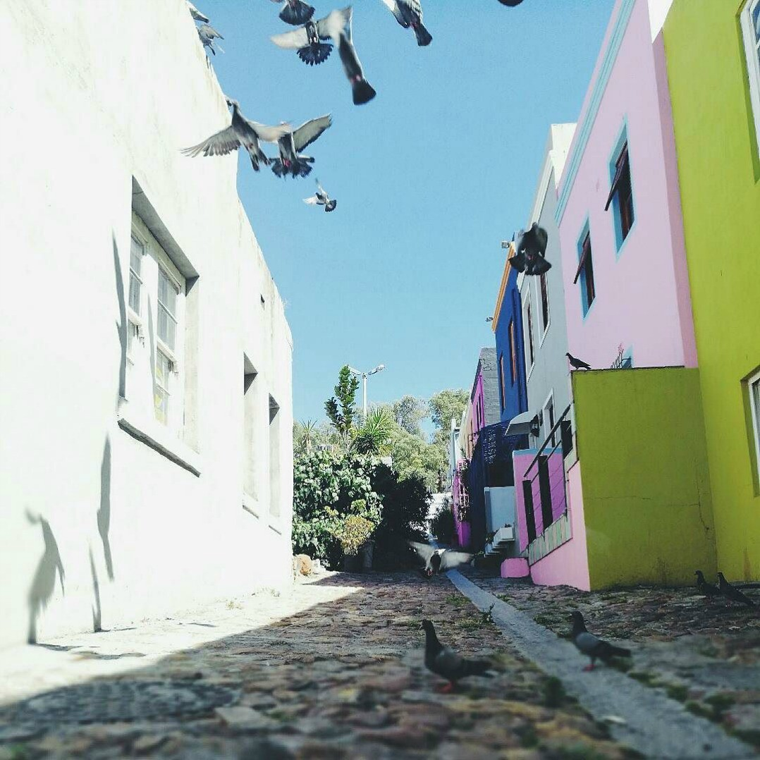 colourful street of houses in Bo Kaap