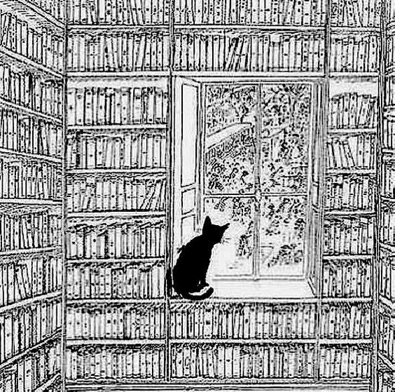 A cat looking out the window from a room with tons of books in the shelves