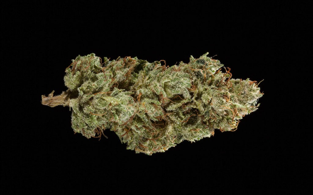 i03_wookie_cookie_2_bud_white_icw_interlochen_alternative_health