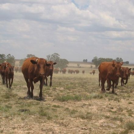 'Catastrophe' Seen by South Africa Agriculture Due to Drought