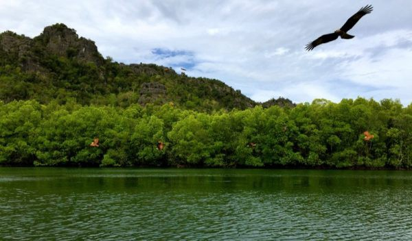 Langkawi Mangroves Photo by Dave from TravelDave.co.uk