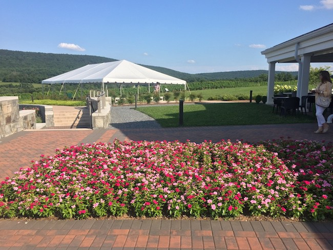Places to Go In Hagerstown: Big Cork Vineyard