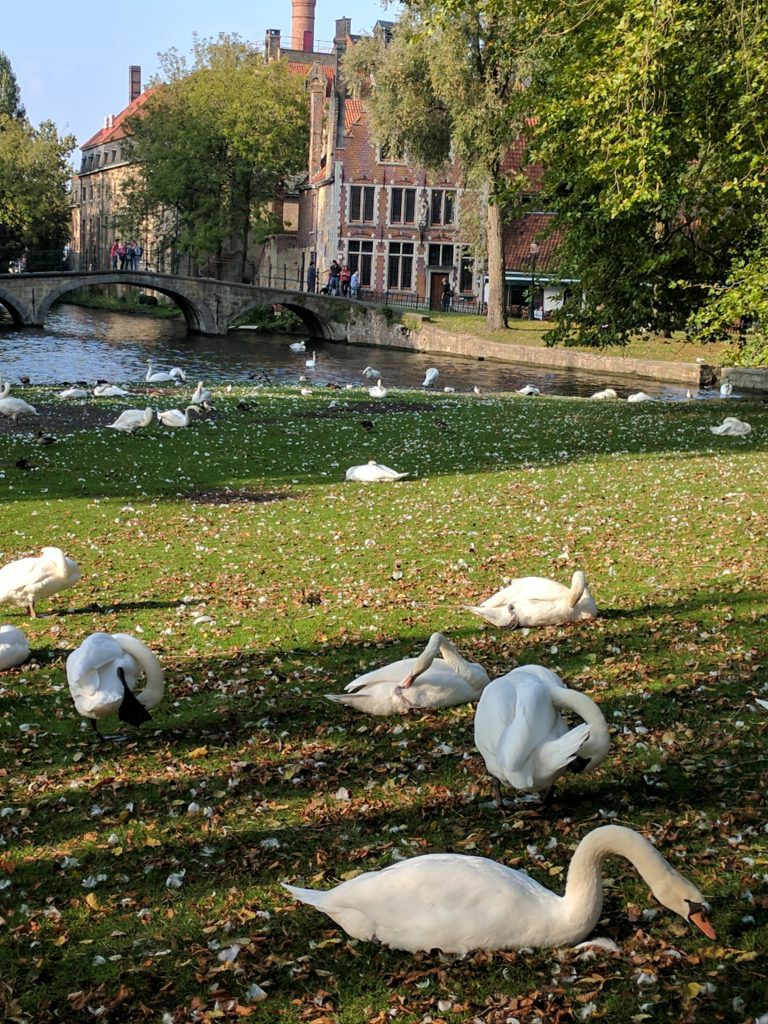 Where all the swans come!
