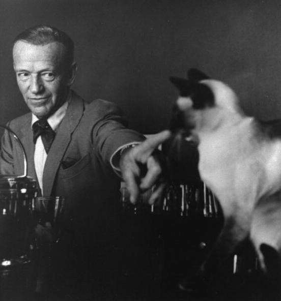 Actor Fred Astaire pointing at siamese cat.
