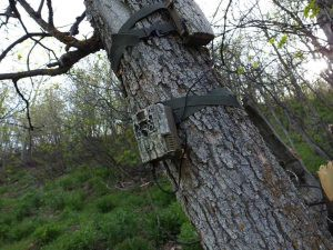 Tricks For Better Results Of Trail Camera