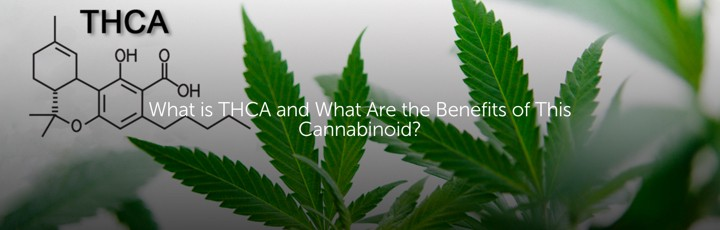 What is THCA and What Are the Benefits of This Cannabinoid?