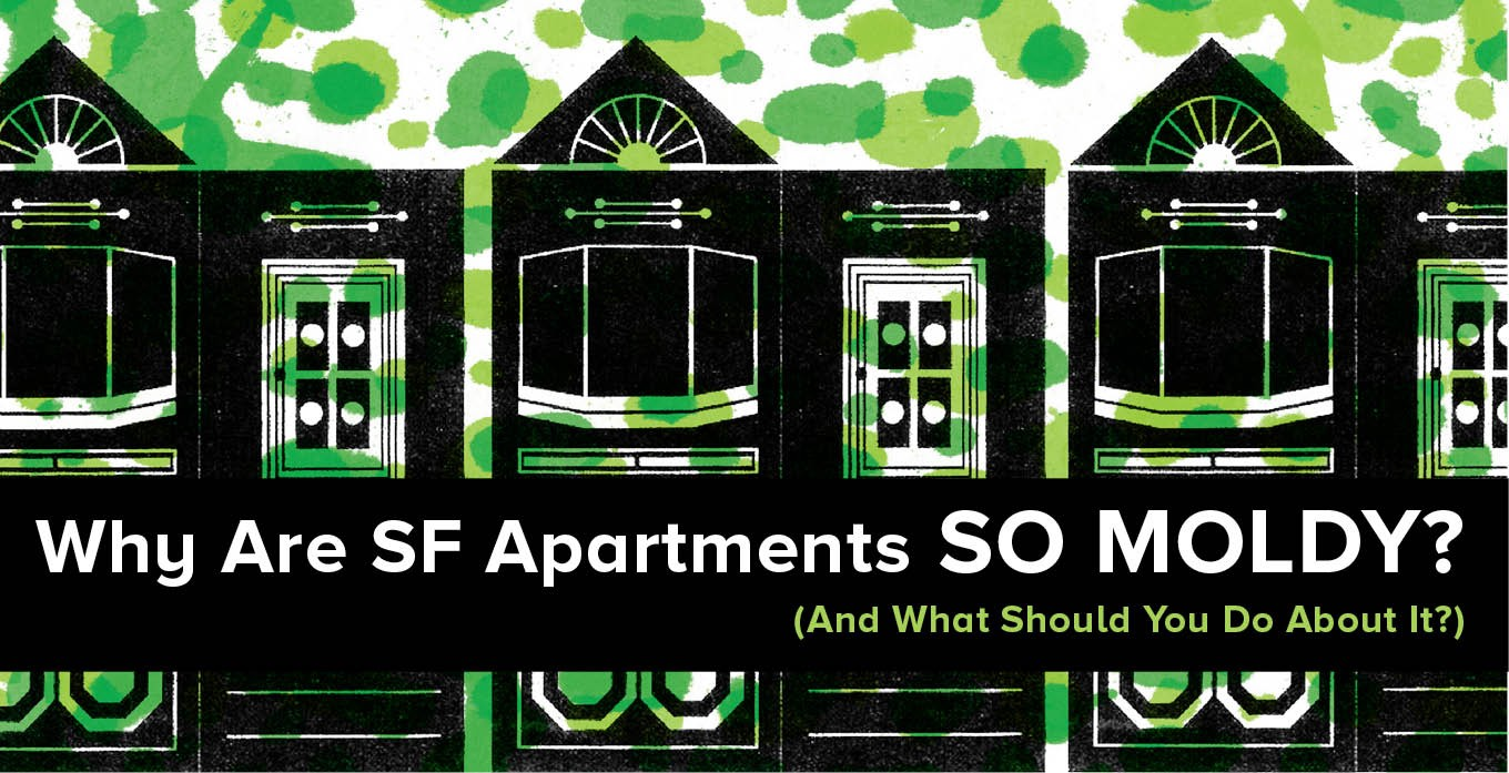 Why Are Sf Apartments So Moldy And What Should You Do About It