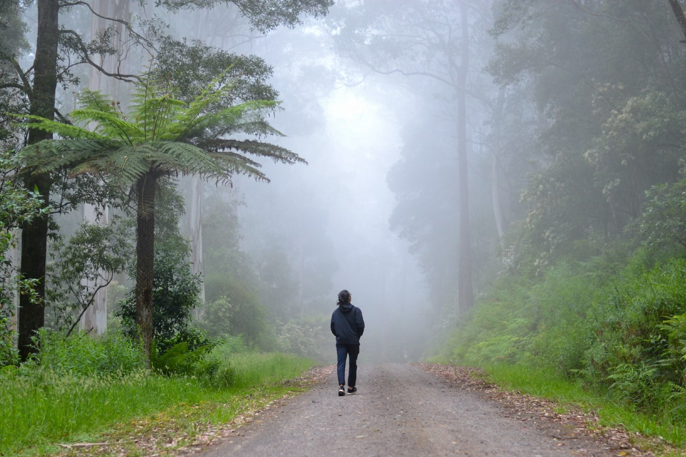 A lone figure walks down a dirt road in a misty forest.