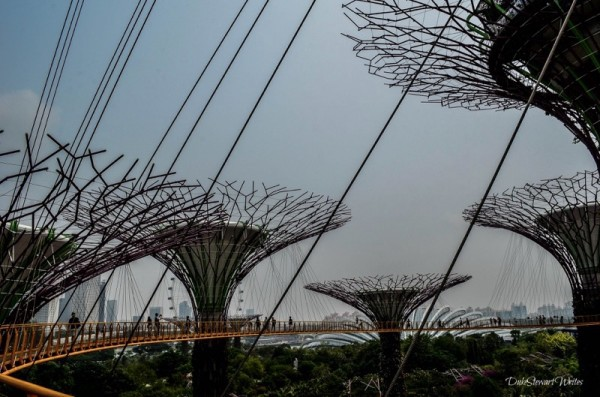 Singapore Supertree Grove and Causeway