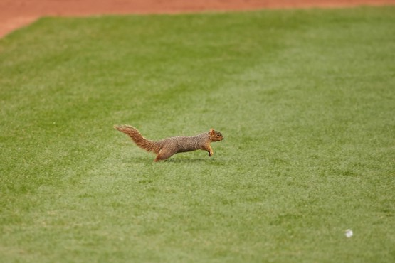Exclusive interview with the Progressive Field squirrel