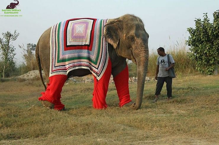 Elephant sweater wildlife sos