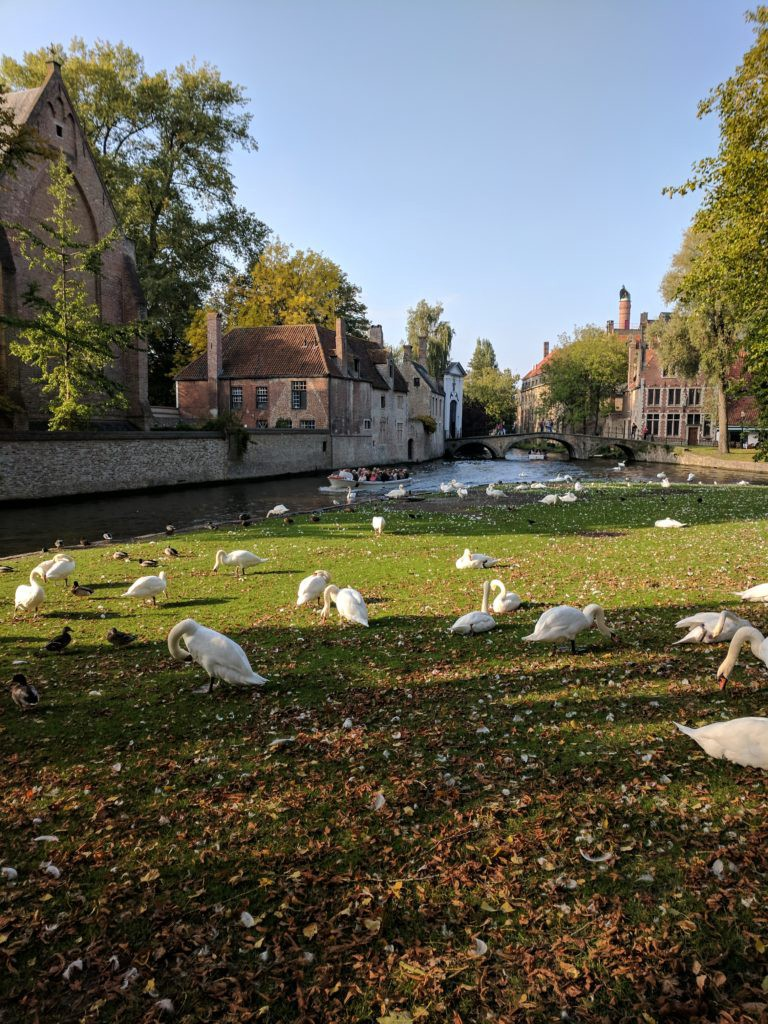 So many swans