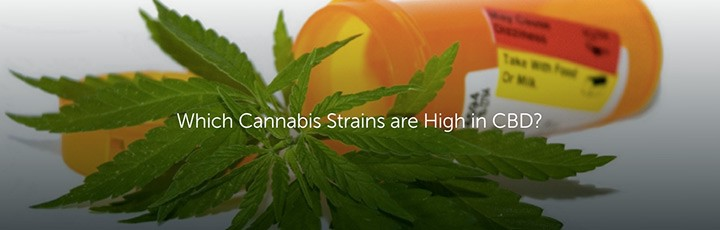 which cannabis strains are high in cbd