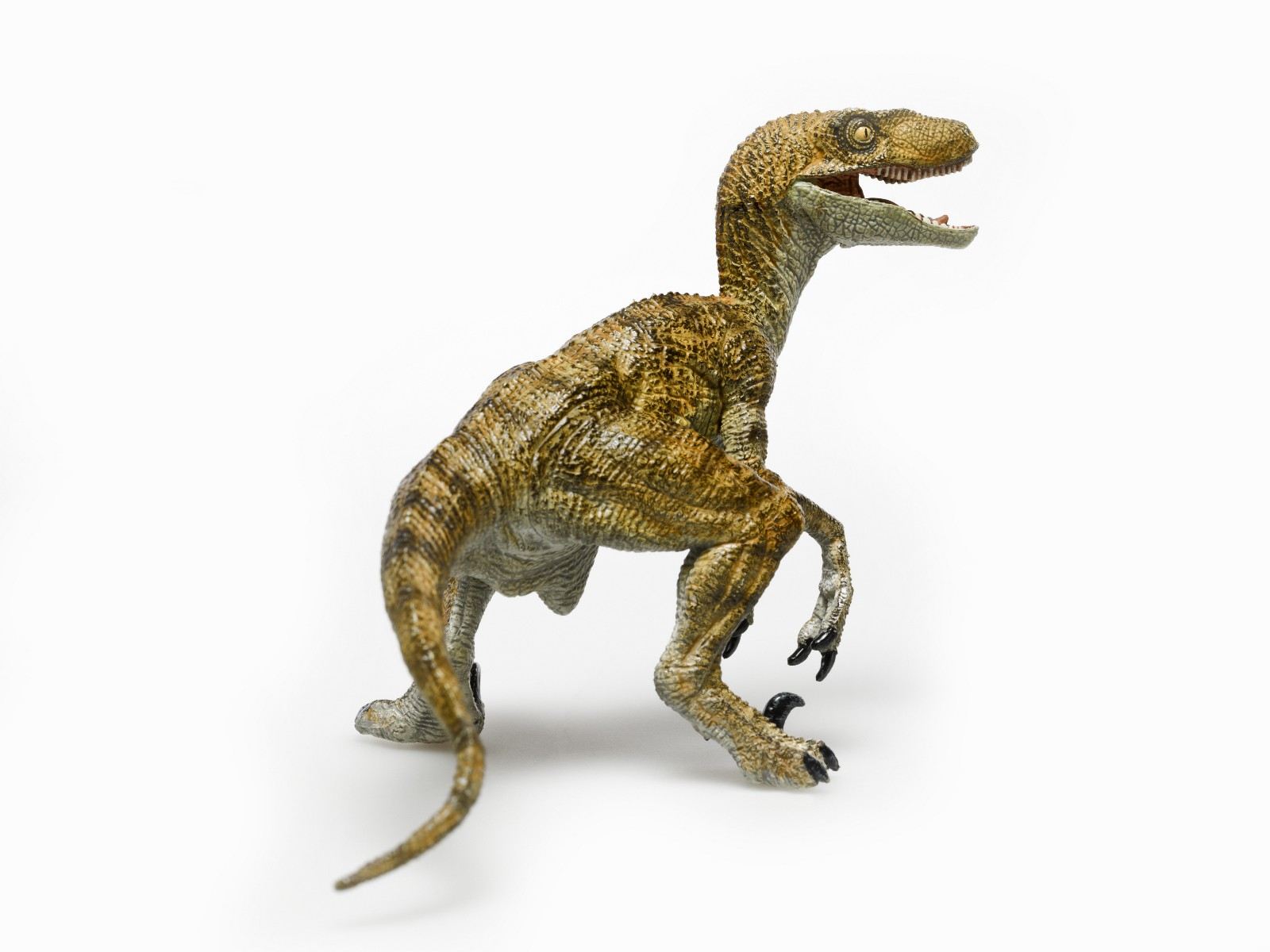 Perhaps The Most Intelligent Of All Dinosaurs This Boss Type Can Be Spotted By His Frequent Display Wit And Intelligence Raptor Bosses Are Peoples