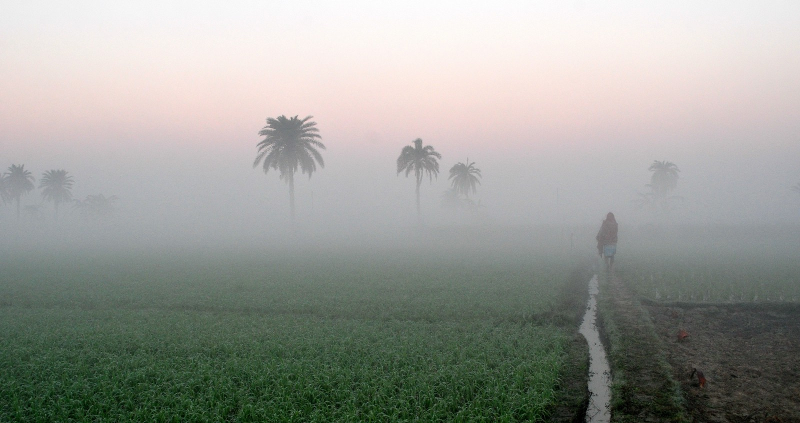 Agriculture_in_India,_Sunrise_time_at_a_village