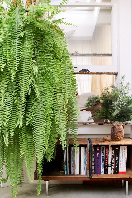 Ferns with books