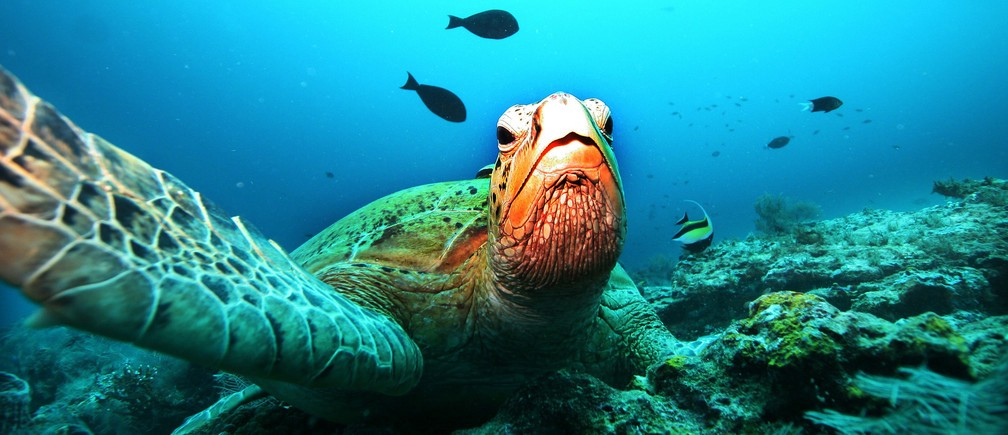 The decline of our oceans is accelerating, but it's not too late to stop it