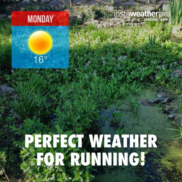 Perfect Weather for running!