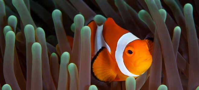 Why Just Keep Swimming Doesn't Work for Rebranding