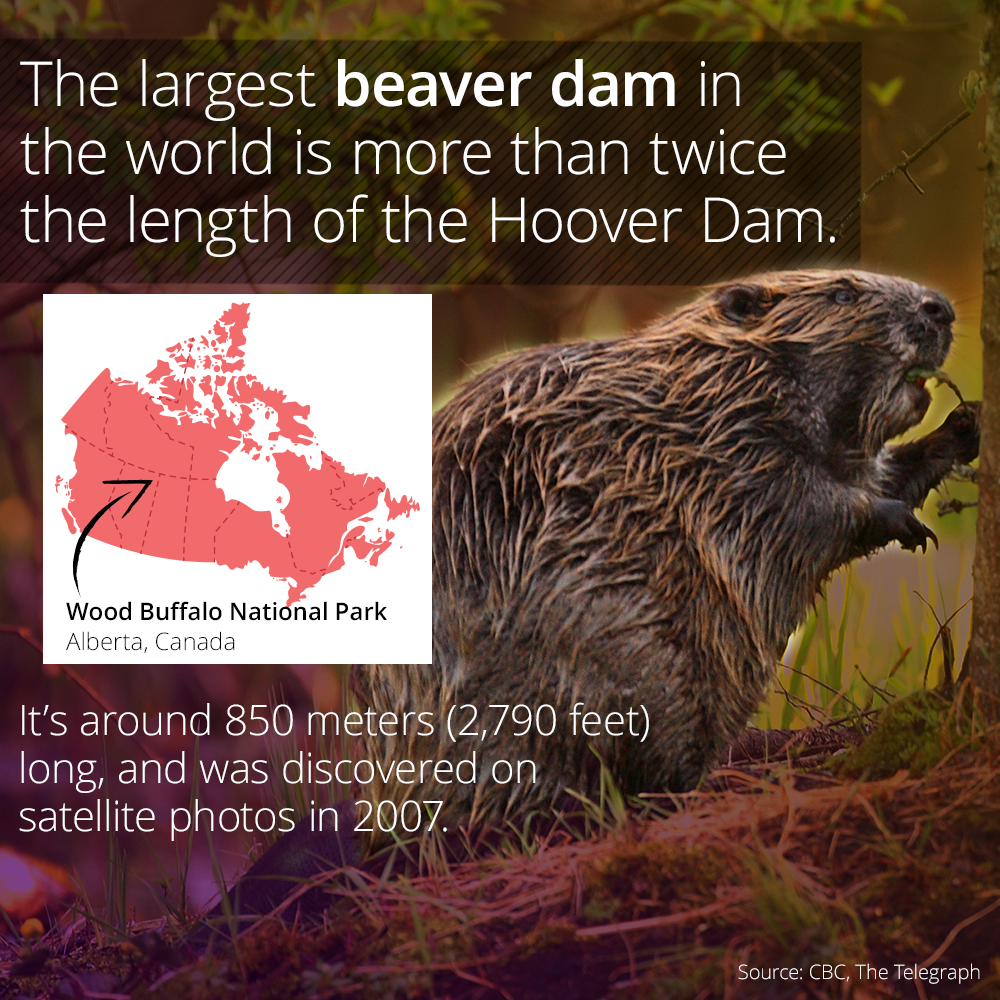 World's Largest Beaver Dam