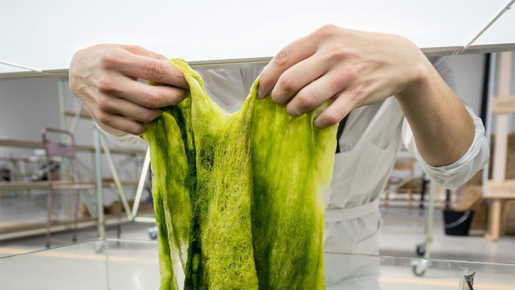 P 1 this algae based polymer may replace oil based plastic one day