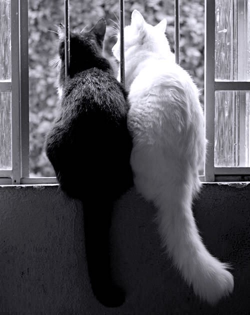 Two cats looking out the window together