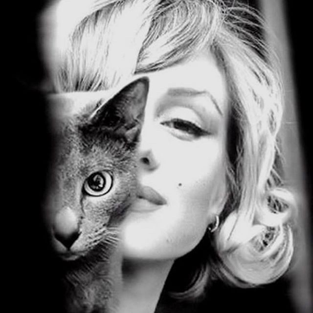 Marilyn Monroe and a cat
