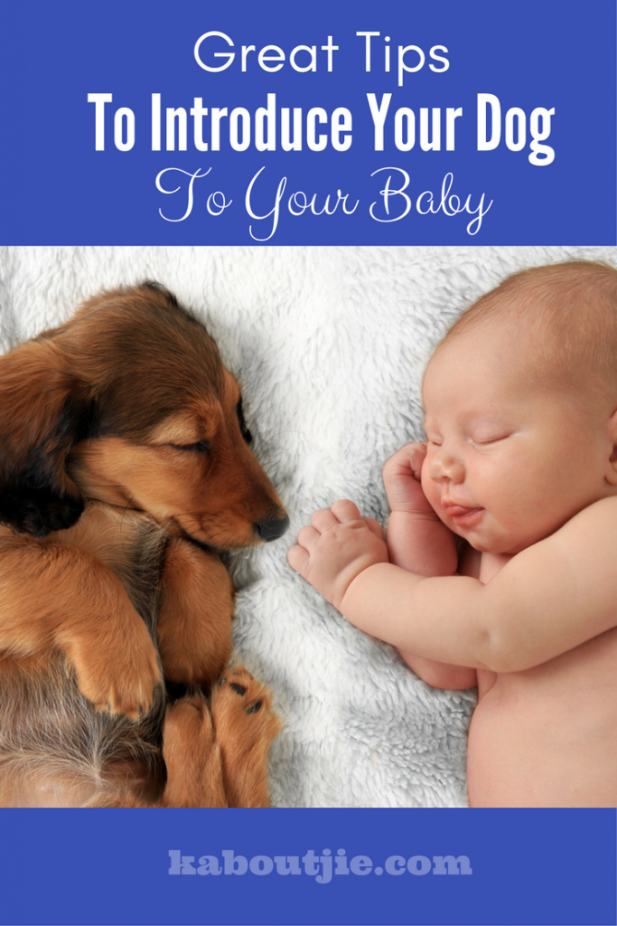 Great tips to introduce your dog to your baby