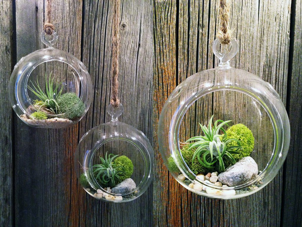 three HangingTerrarium