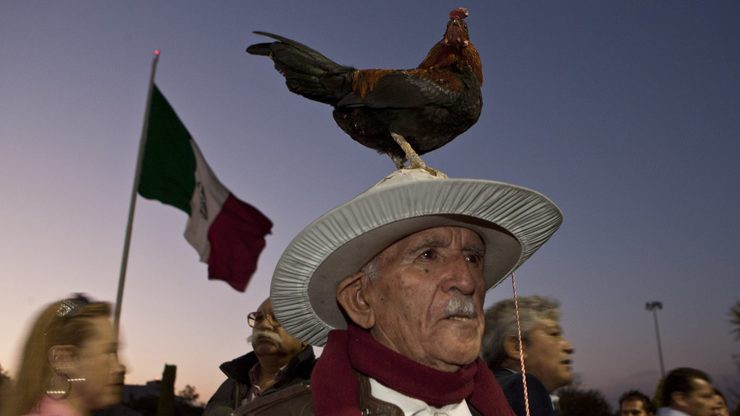 Mexican rooster e1475077342835