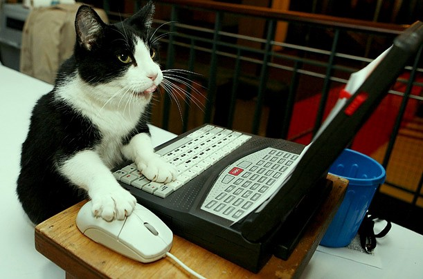 Cat working at laptop