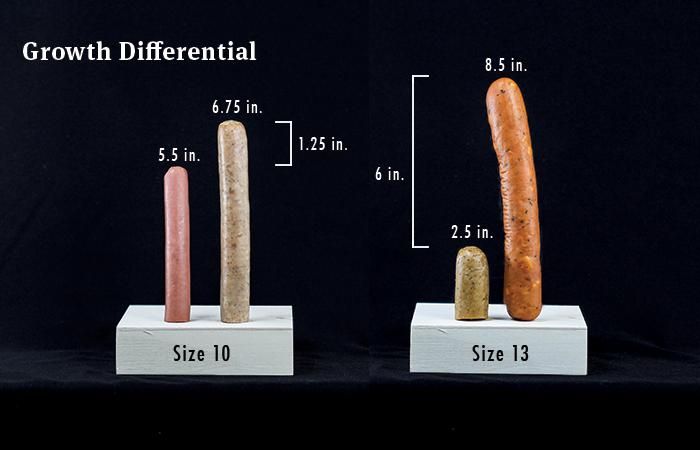 Below average penis size