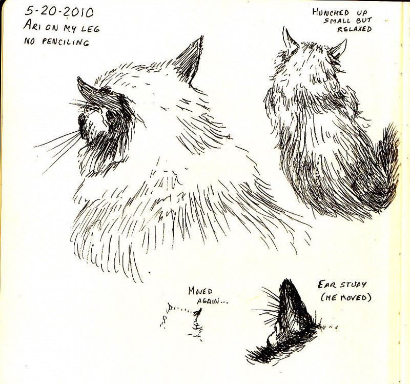 Cat Sketches on Moleskine by robertsloan2