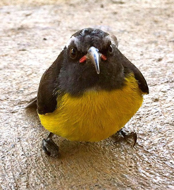A-real-Angry-Bird